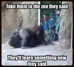 School Trip Meme - 10 kids who got a sex ed lesson courtesy of zoo animals field