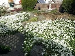 Rock Vegetable Garden Ground Cover For Vegetable Garden Hydraz Club