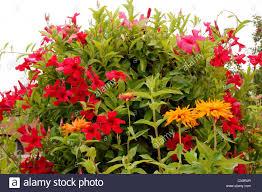 native plants albuquerque plants flowers at jardin rdondo garden botanical gardens