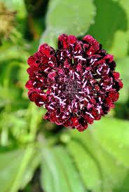 Sunken Gardens Family Membership July Blooms In My Cutting Garden The Martha Stewart Blog