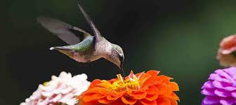 Hummingbird On A Flower - hummingbirds the kissers of flowers u2013 elana millman u0027s sensual living
