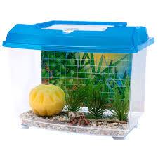 hermit crab kit petsolutions