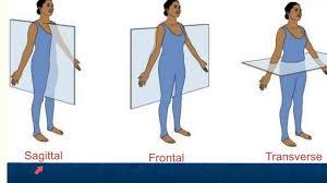 anatomy position terms human anatomy lesson