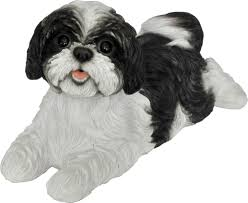 winsome design shih tzu garden innovative ideas image view in