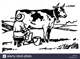 a black and white version of a man milking a cow in a field stock