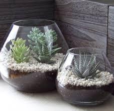 cactus terrarium picmia