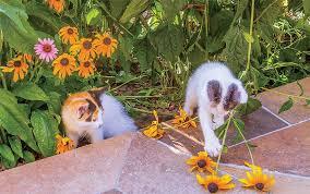 Keep Cats In Backyard Cat Friendly Landscaping American Nurseryman