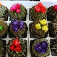 decor tray cactus flower shop in nigeria buy flowers in lagos