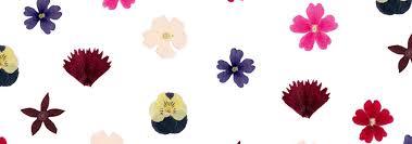 les fleurs comestibles en cuisine fleurs comestibles séchées pour cuisine edélices