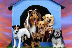 house dogs dogs allowed dog cats house wallpapers images hd 16 9 high