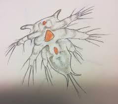 zooplankton