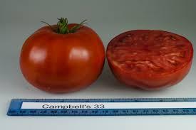 tomato varieties home lawn u0026 garden