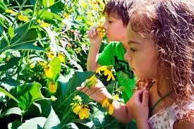 Prospect Park Botanical Garden Kid Friendly Children S Museum Botanic Garden