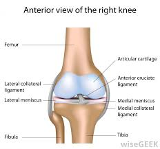 Collateral Ligaments Ankle What Are The Different Types Of Ligament Damage
