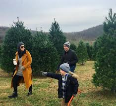 11 places to find the perfect christmas tree near st louis