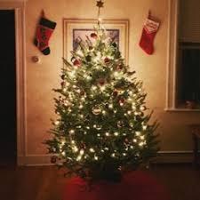 boston christmas trees 35 reviews christmas trees 22 harvard