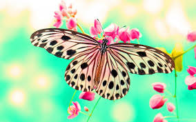 ascension 2018 the year of the butterfly the soul matrix