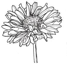 Flower Drawings Black And White - 1406 best flower drawings images on pinterest flower drawings