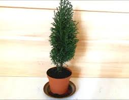 Decorations For Mini Christmas Tree by Decorating A Mini Christmas Tree Cute Diy Tiny Ornaments By