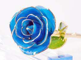 blue roses for sale real black roses for sale 27 desktop background
