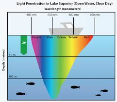what is the wavelength of red light making sense of carp senses part one vision big carp news