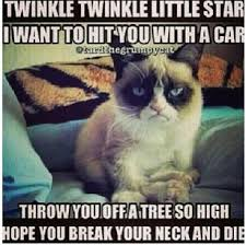 Mean Cat Memes - mean kitty lol humor pinterest kitty grumpy cat and humor