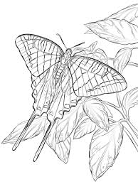 zebra swallowtail butterfly coloring free printable