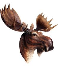 3d moose wall art unique gifts shop colorful gifts