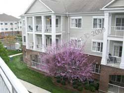 Wyndham Nashville One Bedroom Suite Wyndham Nashville Resort In Nashville Tn