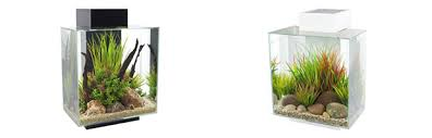 Fluval Edge Aquascape Review Fluval Edge Aquariums Worth The Money Home Aquaria