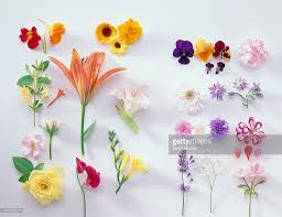 Edible Flowers Large Selection Of Edible Flowers Stock Photo Getty Images