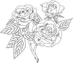 europeana floribunda rose coloring free printable coloring