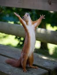 Praying Memes - create meme squirrel praying meme of protein squirrel praying