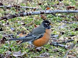 backyard bird watching a nest in the rocks