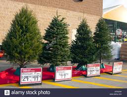different types of christmas trees for sale stock photo royalty
