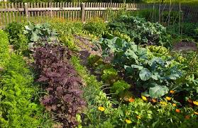 tips for the perfect vegetable garden tips and updates babamail