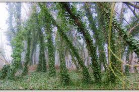 best time to prune 5 common trees in richmond va ridgeline tree