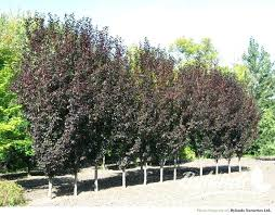 small landscaping tree small landscape trees best small trees ideas