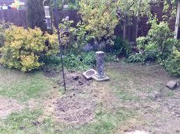 what to do before laying turf gardening forum gardenersworld com