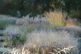 ornamental grasses for the modern garden knoll gardens