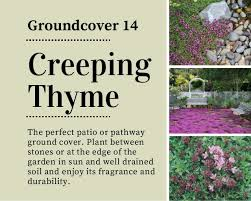 18 beautiful unique groundcover plants for the landscape