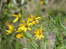 south carolina native plants upstate fall plant sale