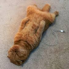 Cat Lover Meme - catlover catlover twitter