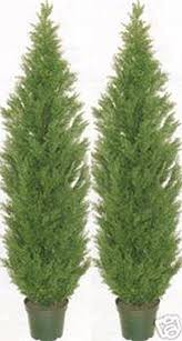 two 5 foot artificial topiary cedar trees potted