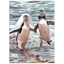 penguin and groom wedding card penguin gift shop