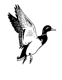 duck hunting clipart free download clip art free clip art on