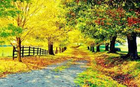 photo collection autumn tree beautiful wallpaper