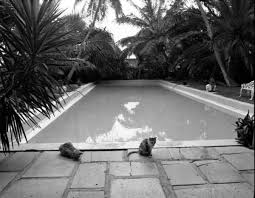 Ernest Hemingway Home Florida Memory Cats By Swimming Pool At The Ernest Hemingway