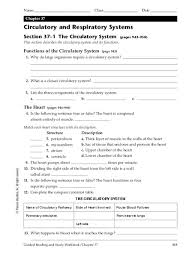 circulatory and respiratory systems 6th 8th grade worksheet