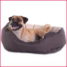 canapé pour chien grande taille canapé splendide canapé pour chien tapis pour chien grande taille